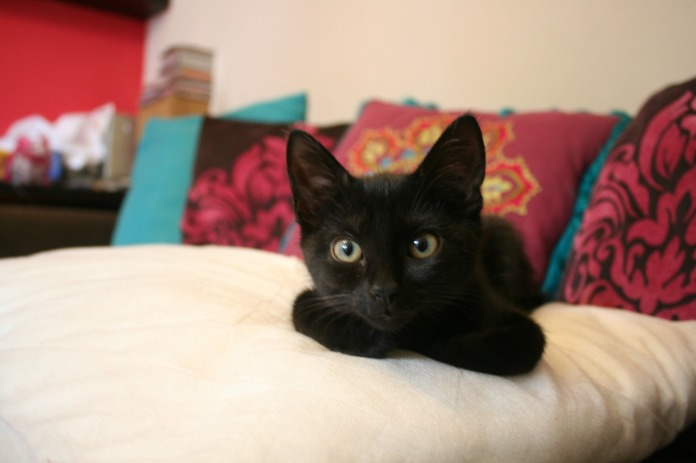 Willow-the-gorgeous-cat